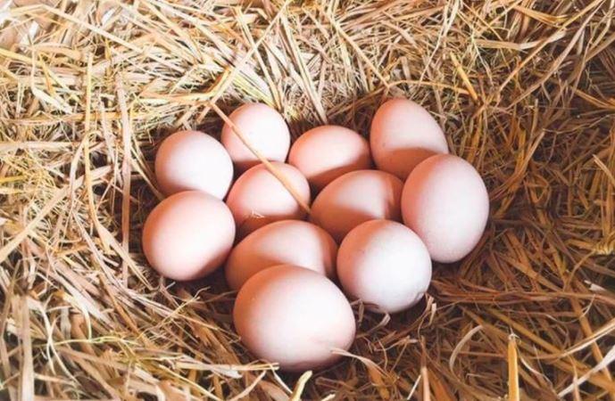 Cách chữa yếu sinh lý bằng trứng gà
