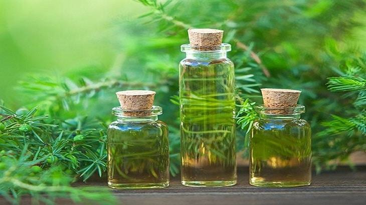 Sử dụng tinh dầu tràm xông nhà giúp bạn và người thân thư giãn