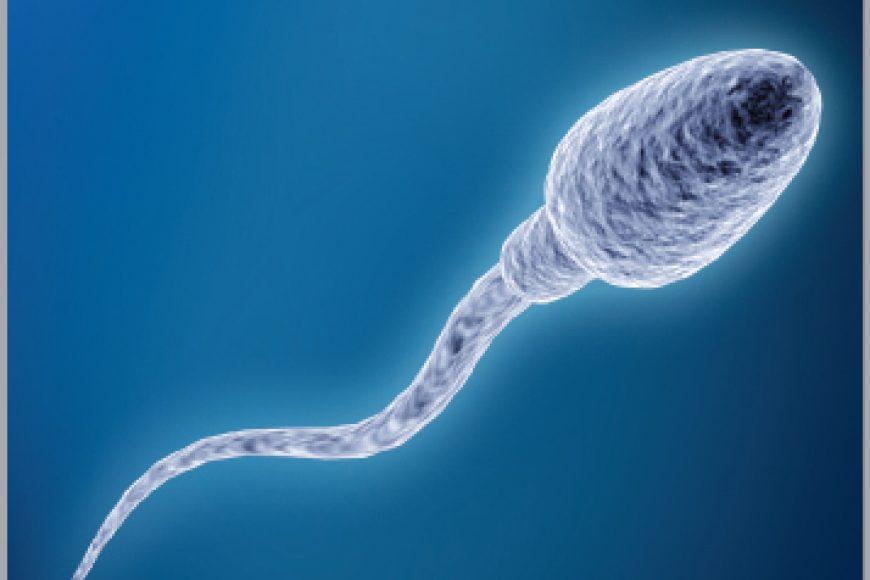 Khả năng sinh sống của tinh trùng là bao nhiêu