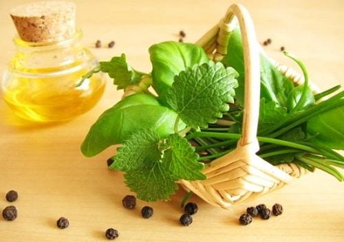 Tác dụng tuyệt vời của tinh dầu Hương Nhu