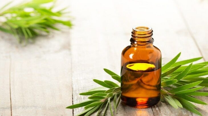 """Tinh dầu tràm được biết đến như một loại """"thần dược"""" với rất nhiều công dụng đối với sức khỏe"""
